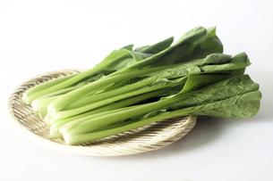 野菜・小松菜の写真素材 [FYI04913345]