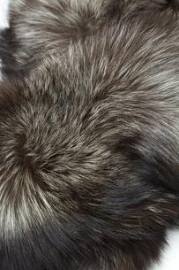 毛皮のテクスチャーの写真素材 [FYI04913406]