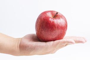 【果物】手のひらの上の赤いリンゴ の写真素材 [FYI04913438]