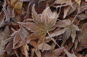 落葉の写真素材 [FYI04913867]