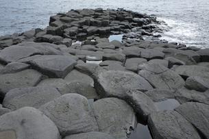 【地学教材】伊豆半島城ケ崎の安山岩溶岩の柱状節理の写真素材 [FYI04914093]