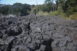 【地学教材】伊豆海浜公園の安山岩溶岩の写真素材 [FYI04914130]