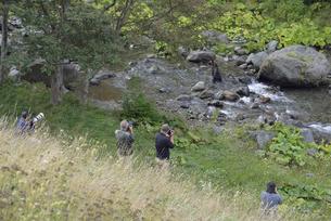 カメラマンとヒグマ(北海道・知床)の写真素材 [FYI04914415]