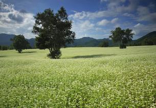 9月 会津地方の会津高原そば畑の写真素材 [FYI04914758]