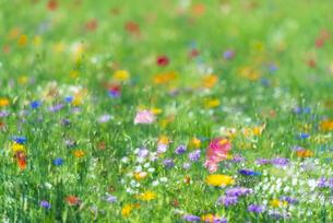 野を彩る花々の写真素材 [FYI04914789]