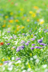 野を彩る花々の写真素材 [FYI04914803]