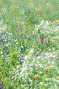 野を彩る花々の写真素材 [FYI04914892]