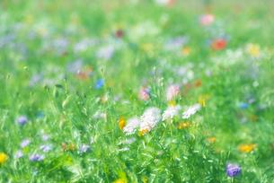 野を彩る花々の写真素材 [FYI04914910]