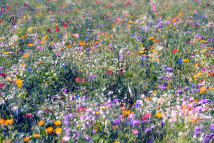 野を彩る花々の写真素材 [FYI04915027]