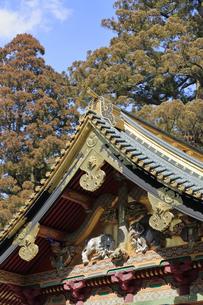 日光 東照宮 三神庫 想像の象の写真素材 [FYI04915044]