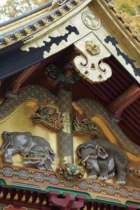 日光 東照宮 三神庫 想像の象の写真素材 [FYI04915110]