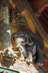 日光 東照宮 三神庫 想像の象の写真素材 [FYI04915113]
