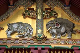 日光 東照宮 三神庫 想像の象の写真素材 [FYI04915115]