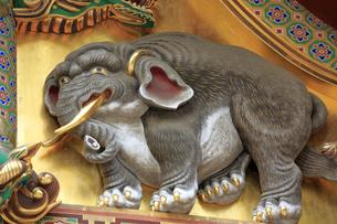 日光 東照宮 三神庫 想像の象の写真素材 [FYI04915116]