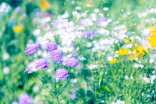 野を彩る花々の写真素材 [FYI04915144]