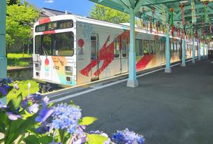 別所温泉駅とれいんどりーむ号とガクアジサイの写真素材 [FYI04915328]