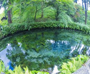 熊本県 高森町  風景 白川水源の写真素材 [FYI04915964]