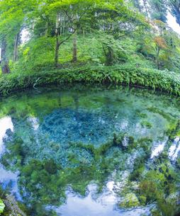 熊本県 高森町  風景 白川水源の写真素材 [FYI04915966]