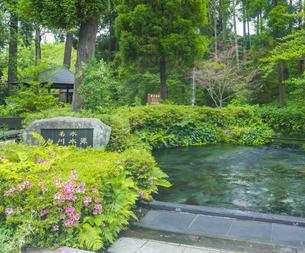 熊本県 高森町  風景 白川水源の写真素材 [FYI04915976]
