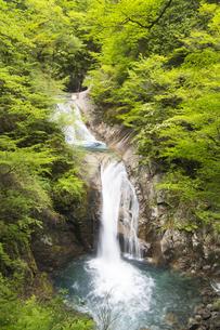 西沢渓谷の七ツ釜五段五段の滝と新緑の写真素材 [FYI04916145]