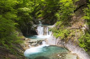 西沢渓谷の七ツ釜五段五段の滝と新緑の写真素材 [FYI04916161]
