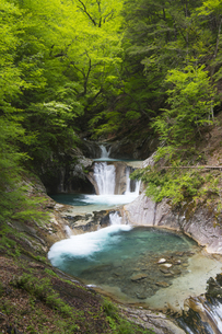 西沢渓谷の七ツ釜五段五段の滝と新緑の写真素材 [FYI04916168]
