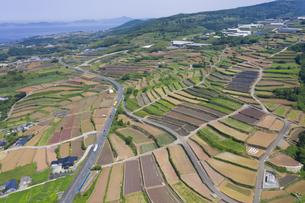 長島町のジャガイモ段々畑の写真素材 [FYI04916325]