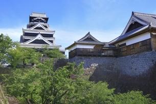 熊本城 大天守と本丸御殿の写真素材 [FYI04916396]