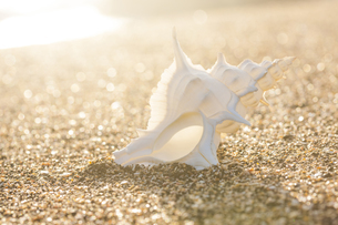 貝殻の写真素材 [FYI04916654]