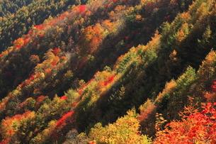 10月 紅葉の日光市林道の写真素材 [FYI04917042]