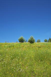 彩香の里の野の花の写真素材 [FYI04917110]