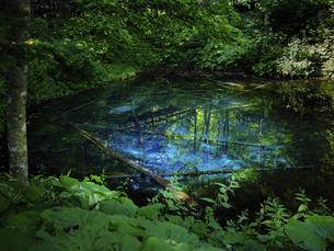 神の子池の写真素材 [FYI04917182]