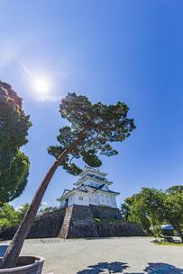 小田原城本丸広場から臨む天守閣と松の大木の写真素材 [FYI04917216]