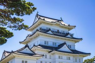 小田原城本丸広場から臨む天守閣と松の大木の写真素材 [FYI04917229]