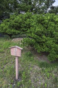 駿府城公園家康公手植えのミカンの写真素材 [FYI04917316]