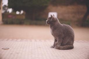 スペイン世界遺産グラナダのアルハンブラ宮殿に住む猫たちの写真素材 [FYI04917320]