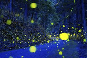 森に舞うヒメボタルの写真素材 [FYI04917654]