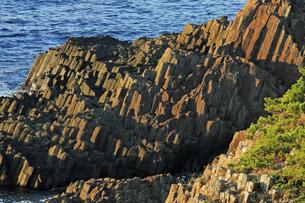 朝日に輝く爪木崎の安山岩溶岩の柱状節理の写真素材 [FYI04917744]