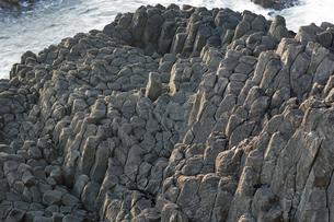 【地学教材】 伊豆半島爪木崎の安山岩溶岩の柱状節理の写真素材 [FYI04917745]