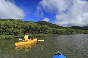 マングローブ原生林でカヌーをする女性の写真素材 [FYI04918111]