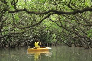 マングローブ原生林のヒルギのトンネルでカヌーをする女性の写真素材 [FYI04918113]