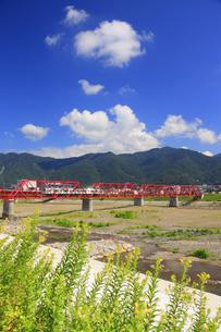 マツヨイグサ咲く赤い鉄橋を渡る輝くれいんどりーむ号の写真素材 [FYI04918399]