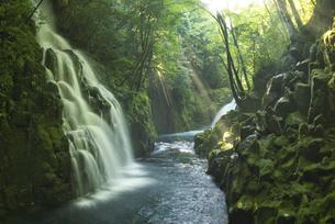 夏の菊池渓谷の写真素材 [FYI04918704]