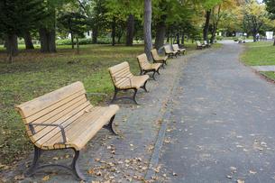 秋の公園のベンチの写真素材 [FYI04919052]