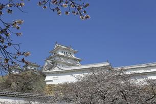初春の姫路城の写真素材 [FYI04919068]