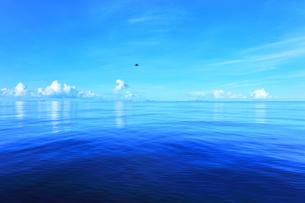 小笠原諸島 穏やかな太平洋にカツオドリと聟島列島の写真素材 [FYI04919575]