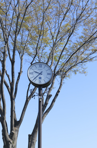 ケヤキの芽吹きと公園のソーラー時計の写真素材 [FYI04919870]