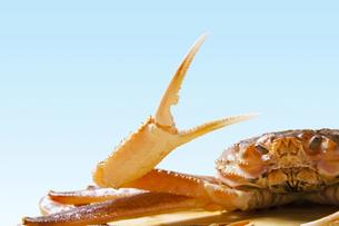 はさみを広げる蟹の写真素材 [FYI04920038]