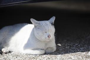 車の下で昼寝をする猫の写真素材 [FYI04920131]