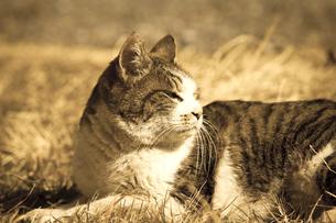 野良猫の写真素材 [FYI04920138]